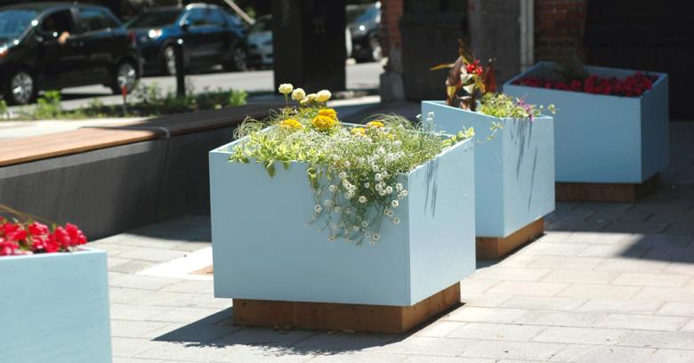 Jardinières de l'aménagement de la rue Prince Arthur